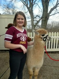 Meeting the Alpacas